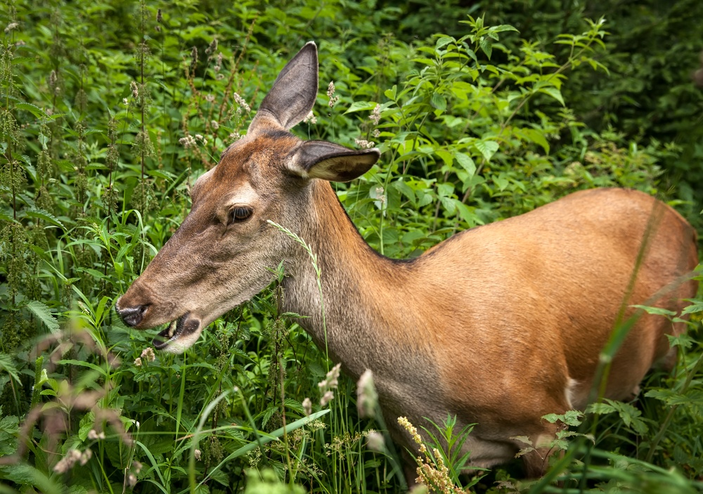 Deer can ravage your yard, especially when food is scarce.