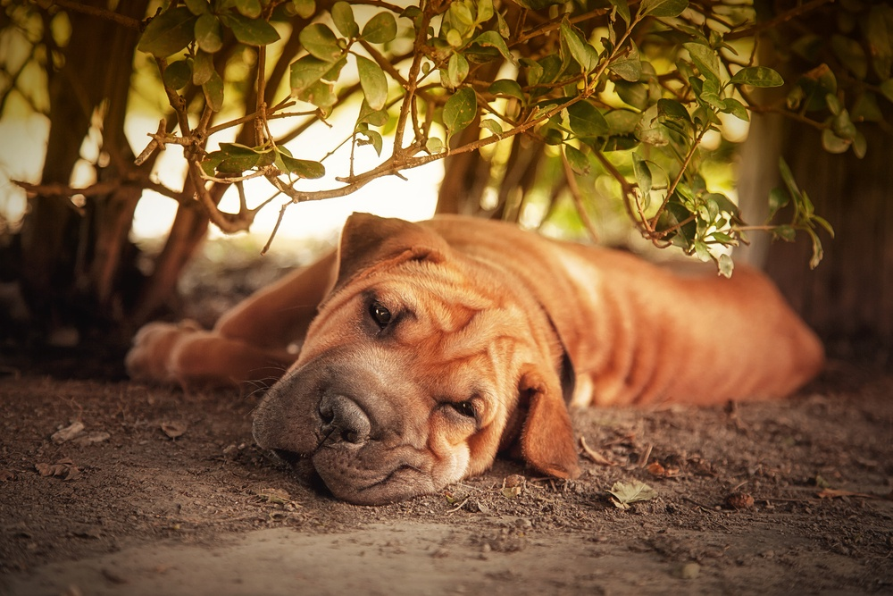 Give your dog a place to relax in the shade!