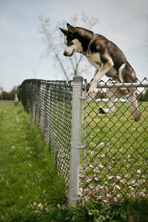 5 Things To Consider When Getting A Fence For Your Big Dog