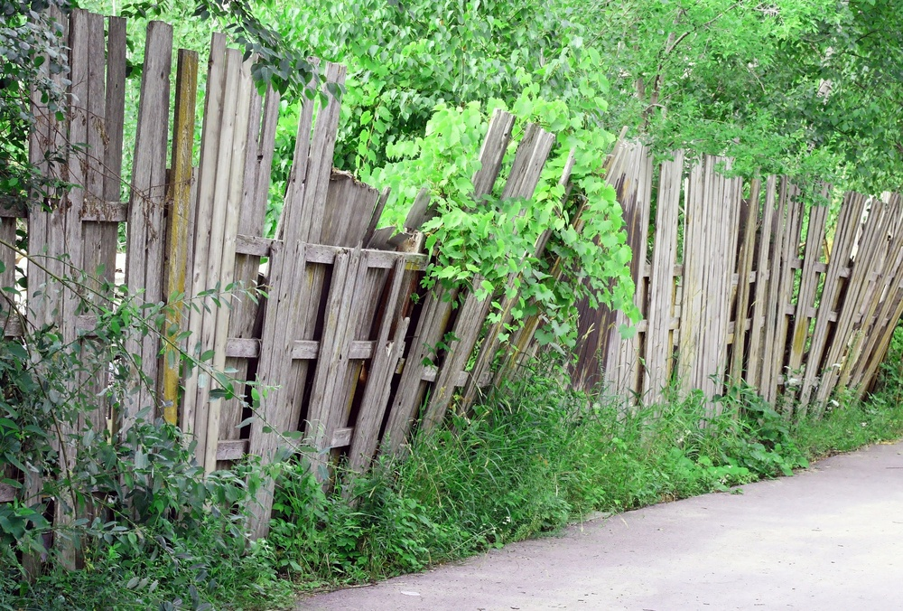 Vines can easily cause damage to a wood fence over time.